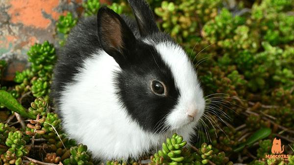 Conejopequeño