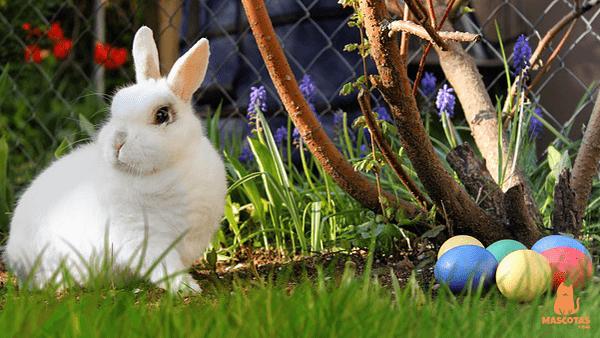 Conejo blanco