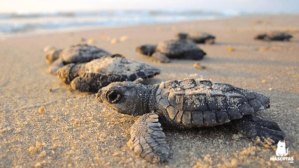 Tortugas bebes