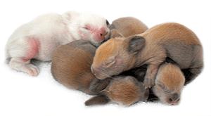 Crías de conejo o conejos recién nacidos