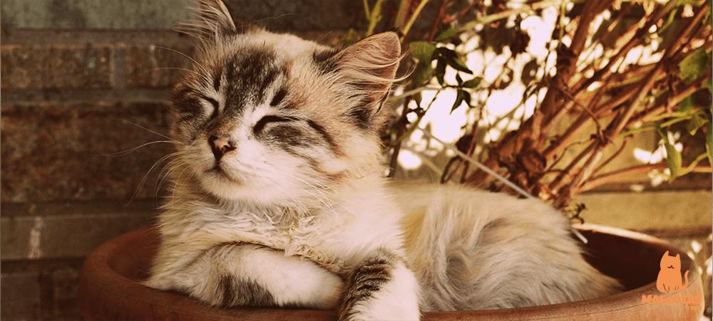 Gatos portada