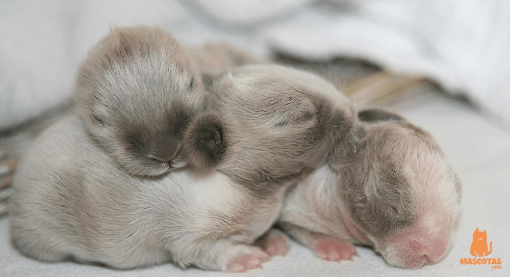 Conejos recién nacidos