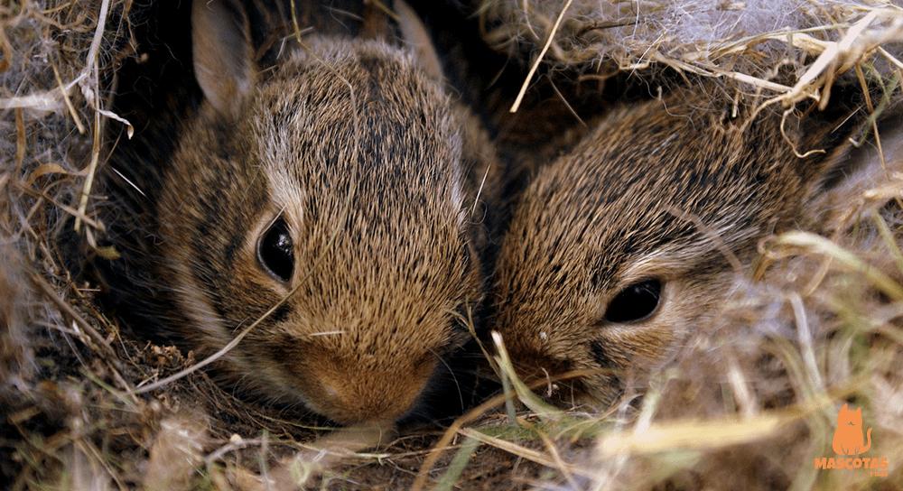 Madriguera de conejos en la naturaleza