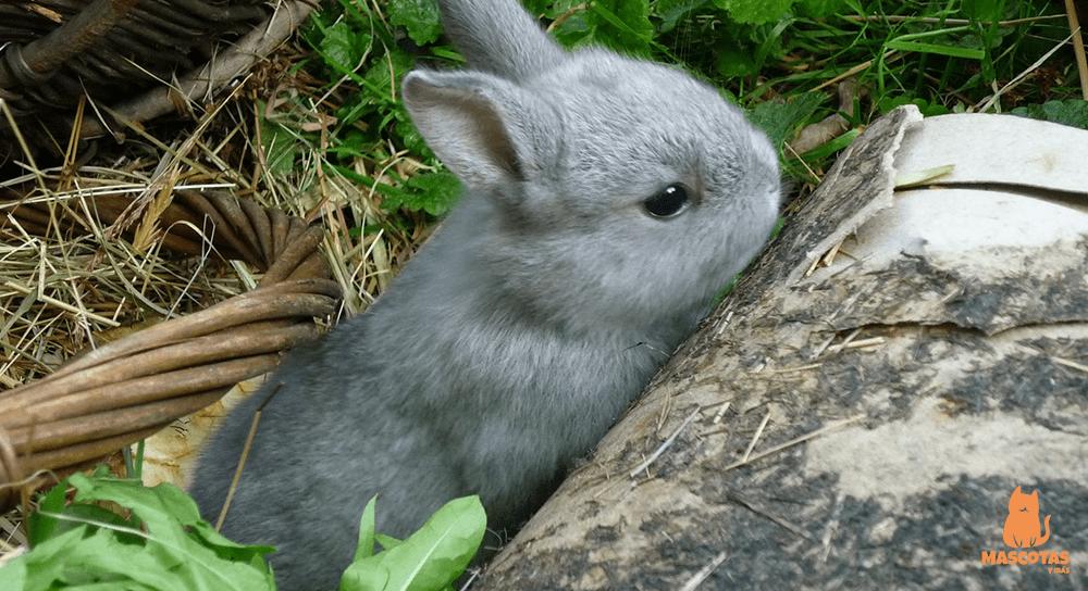 Conejo pequeño en la naturaleza