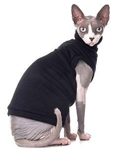 Ejemplar de gato Sphynx con jersey