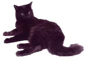 Gato Chantily
