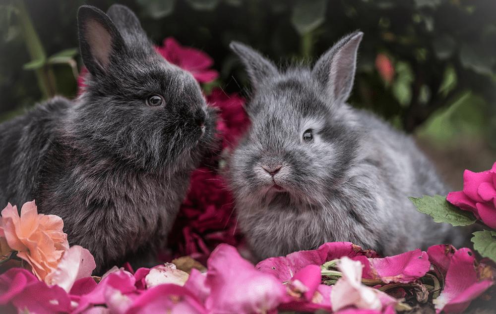 Pareja de conejos enanos de color gris entre flores