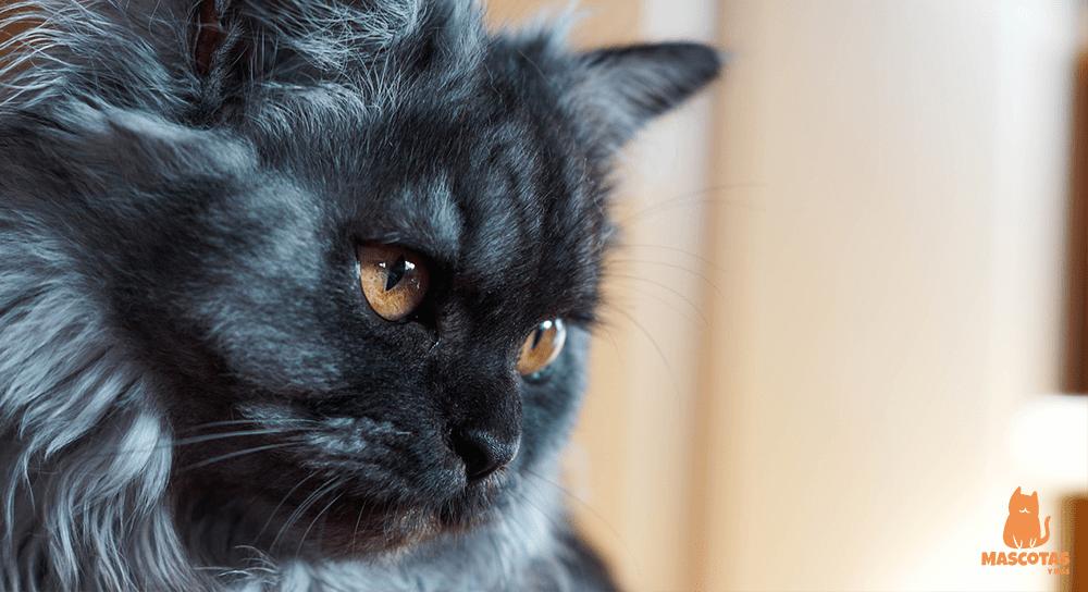 Eliminar nudos gato de pelo largo