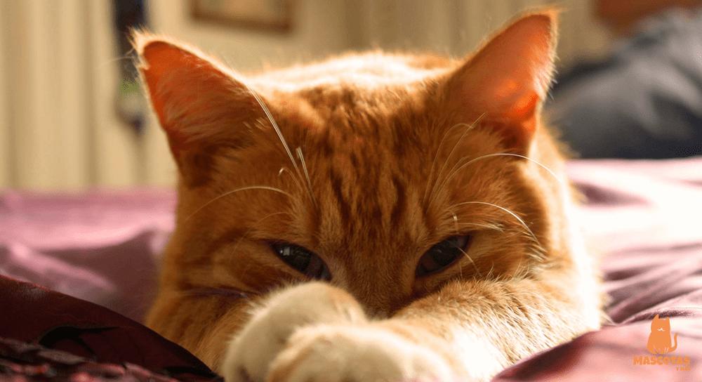 Gato atigrado naranja jugando