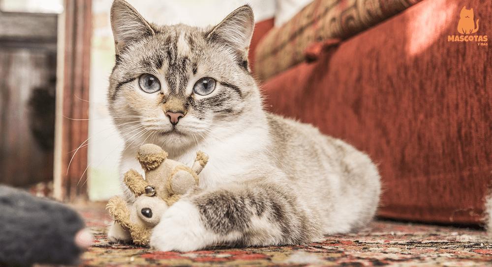 Gato gris jugando con un peluche
