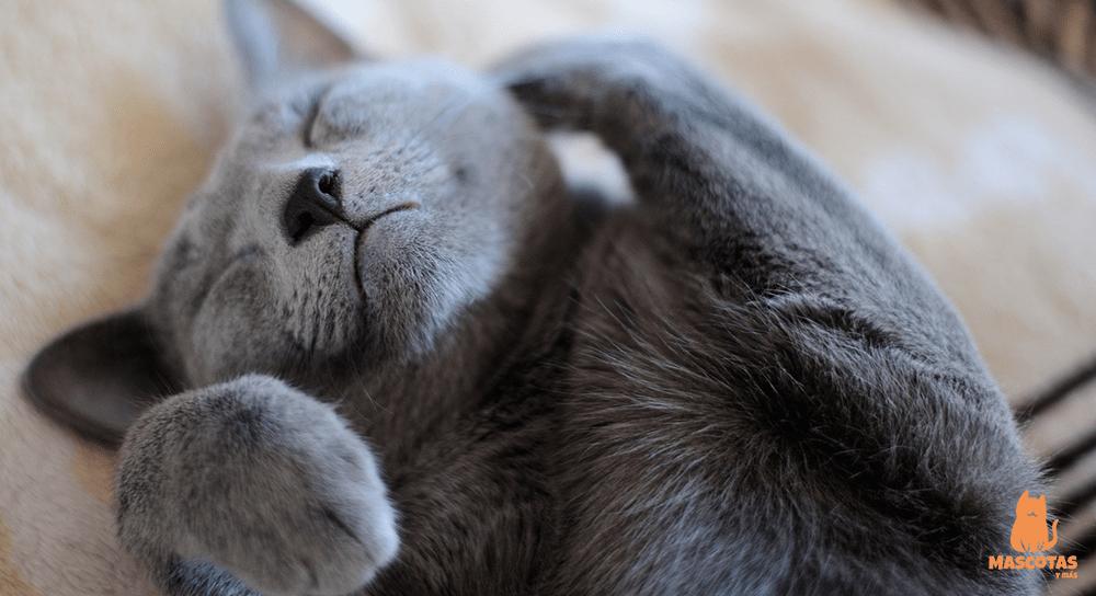 Antes de adoptar un gato