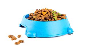 Comedero de plástico con pienso para gatos
