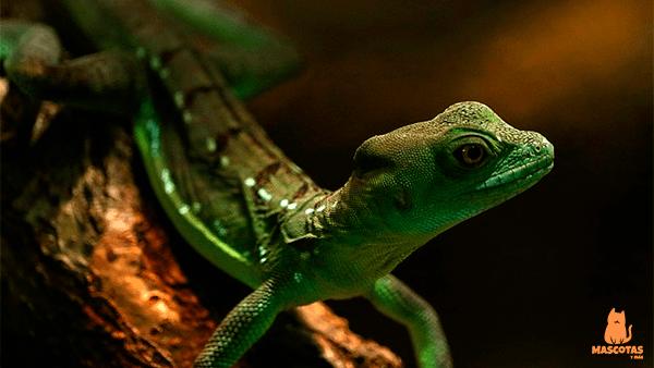 Gecko verde sobre una rama