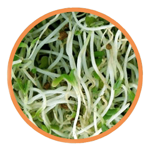 Germinado de soja