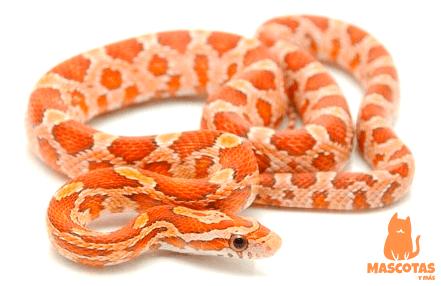Serpiente del maíz
