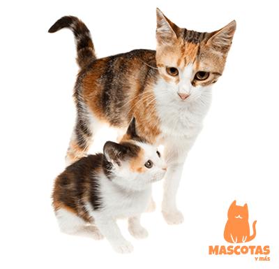 Madre de gato con su cría