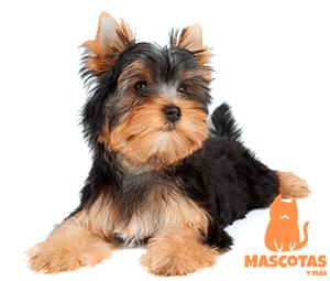 Nombres de perros machos pequeños
