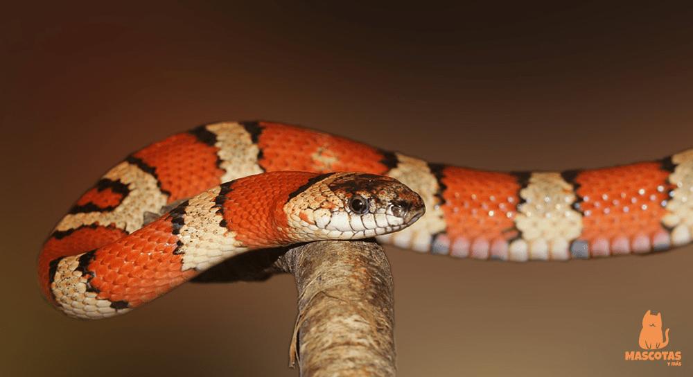 Nombres para serpientes