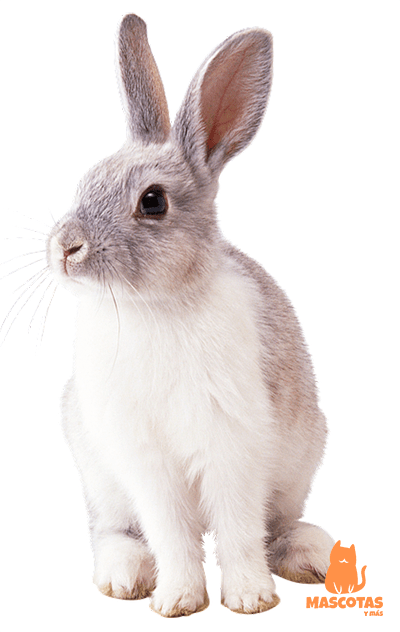Nombre japonés conejo