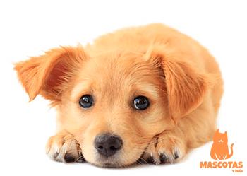 Nombre para perras en japonés