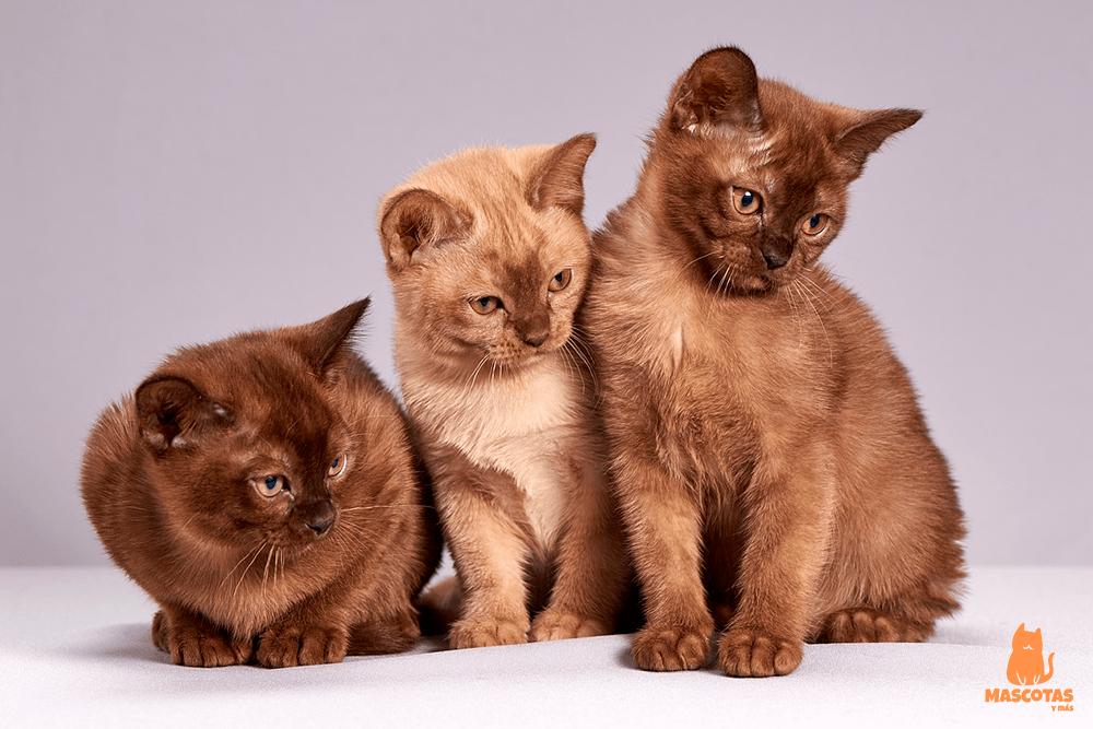 Nombres gatos