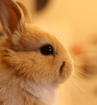 Nombres para conejos en japonés