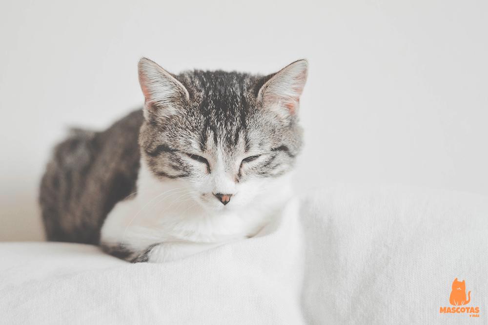 Nombres para gatos hembra
