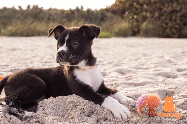 Cachorro jugando con pelota