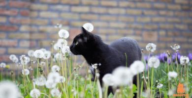 ¿Cómo ahuyentar gatos callejeros?
