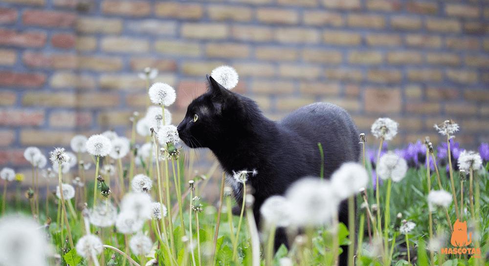 Cómo ahuyentar gatos callejeros