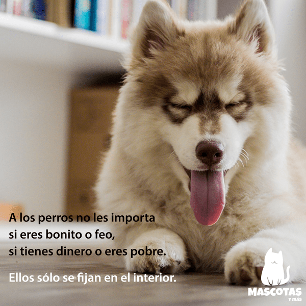 Frase amor perro