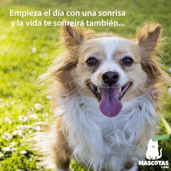 Frase perro instagram