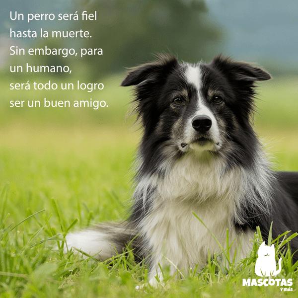 Frase tierna perro
