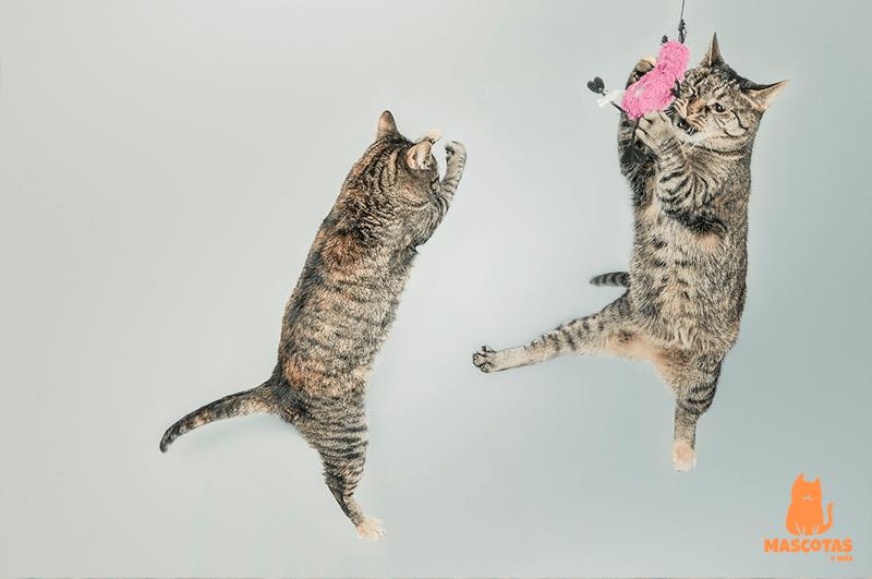 Gatos saltando