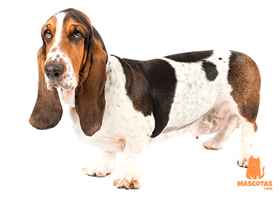 Nombres mitológicos para perros
