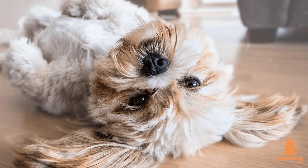 Nombres para perros graciosos