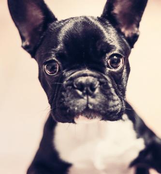Nombres para perros originales y bonitos