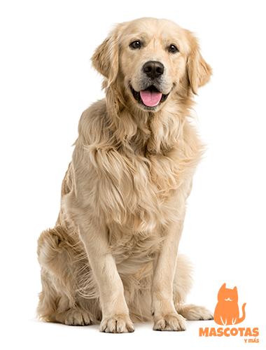 Nombres de perros machos grandes