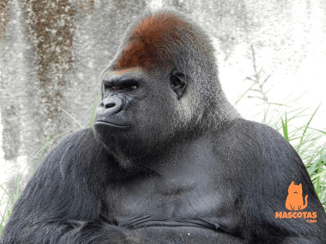 Fuerza gorila
