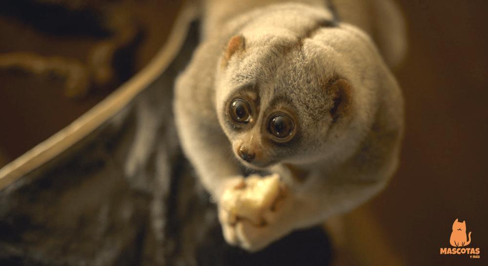 Los animales más exóticos del mundo