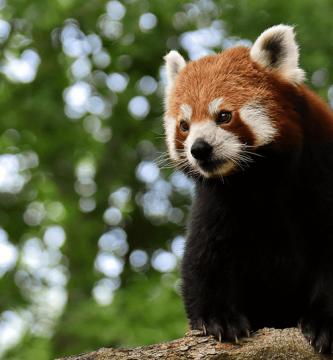 Los animales más solitarios del mundo