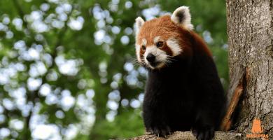 Los 10 animales más solitarios del mundo