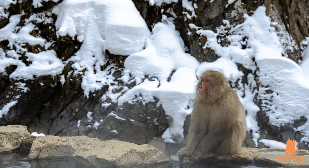 Macaco Onsen