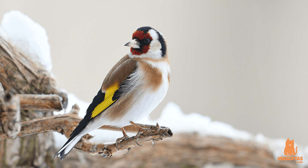 Pájaros que mejor cantan