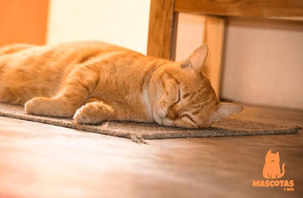 Personalidad gato naranja