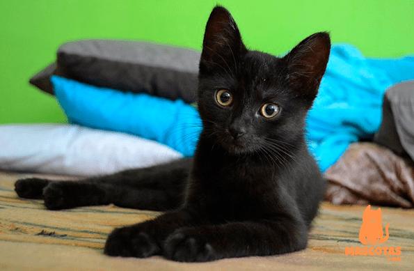 Personalidad gato negro