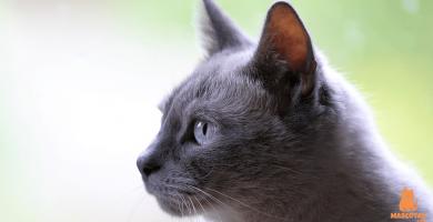 5 síntomas de que un gato se va a morir