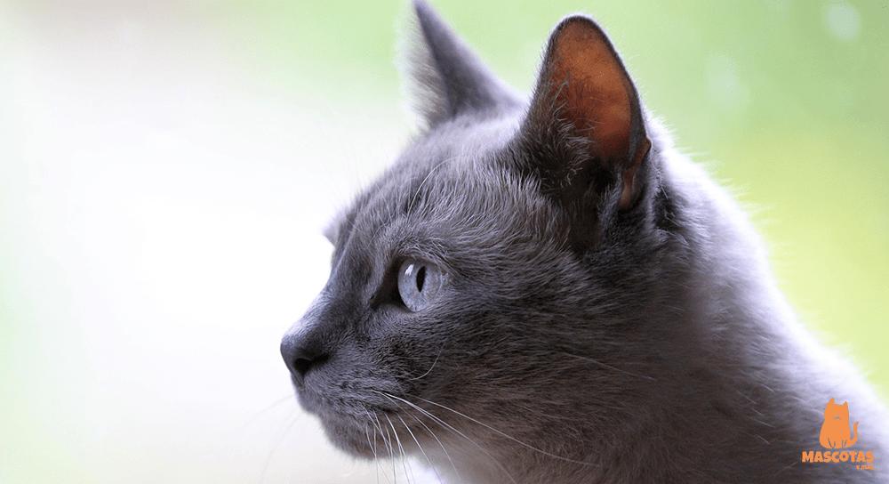 Síntomas de que un gato se va a morir