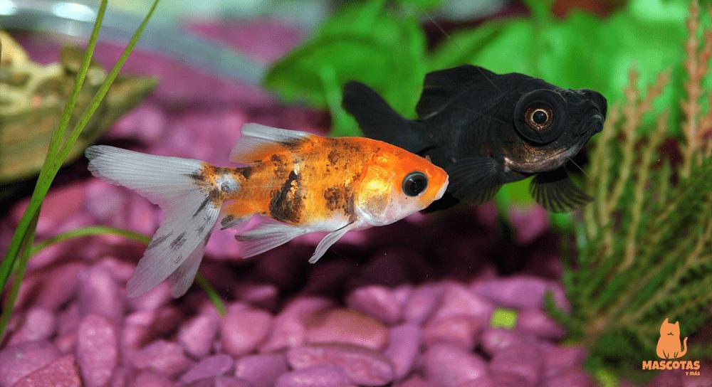 Consejos para montar tu primer acuario
