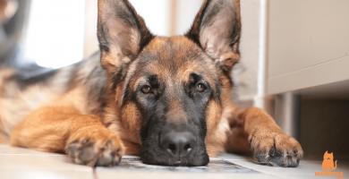 Los mejores perros guardianes